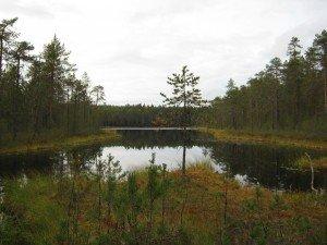 Карельское лесное озеро