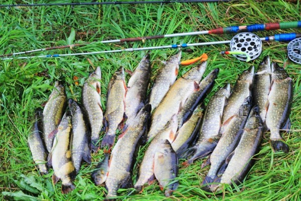рыбалка на реке Каспля Смоленская область
