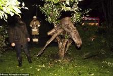 В Швеции пьяный лось застрял на дереве