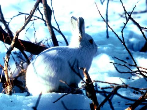 Охота в России: Вышел зайчик погулять!