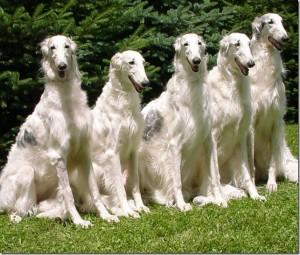 клички охотничьих собак кобелей и сук