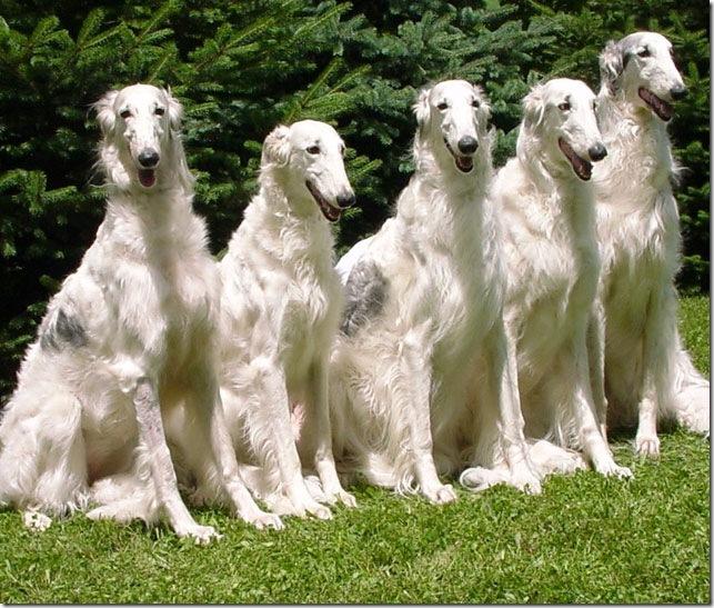 охотничьих собак разных пород