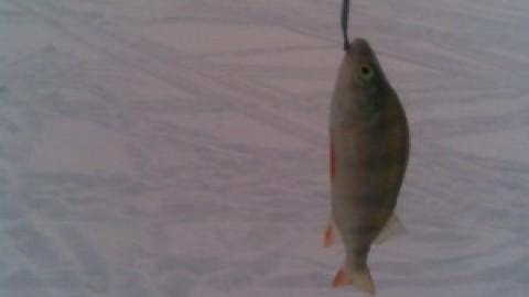 Рыбалка на Камском водохранилище с 8 по 10 марта