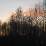 Весна, боровая, охота на токах…