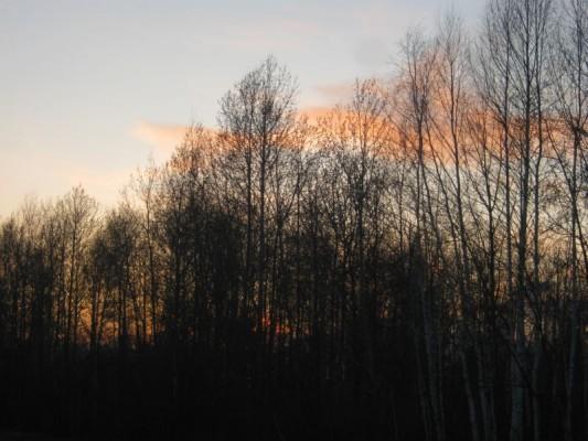 Весна, боровая, охота на токах...