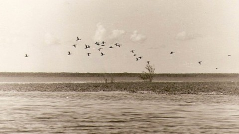 Любителем охотничьего и рыболовного туризма