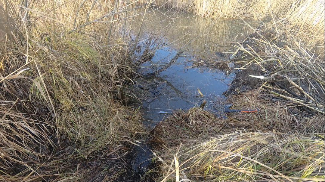 Бобровая плотина и капкан фото