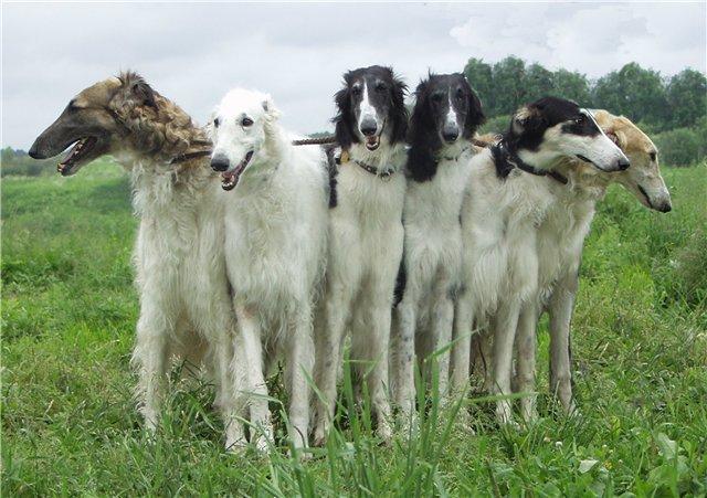 Лучшая универсальная собака для охоты. Какую выбрать?
