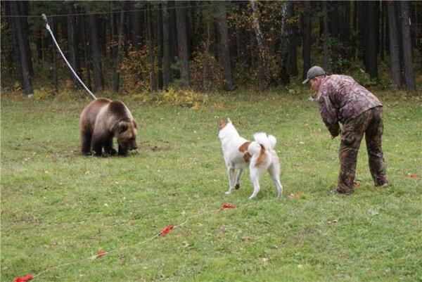 притравка по медведю