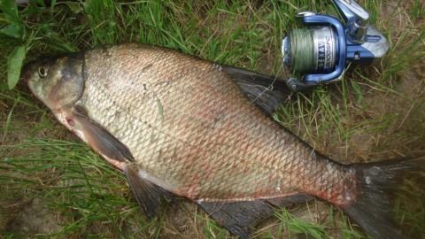 Рыбалка на Северском Донце. Фидерная ловля