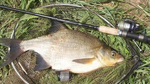 Ловля леща на фидер: поиск рыбы, правильная оснастка и закормка