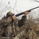 Эффективные способы охоты на гуся из шалаша весной