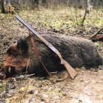 Эффективные способы охоты на кабана с засидки и с подхода