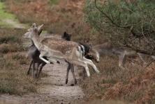 Эффективные способы охоты на косулю: с похода, с засидки и загоном