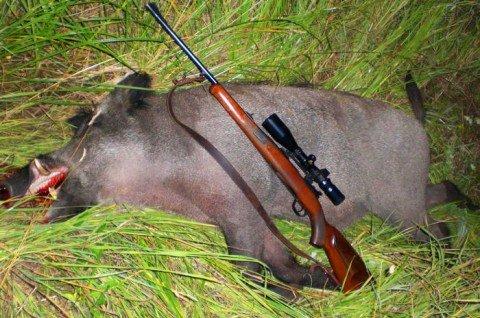 Выбираем оружие для охоты на кабана