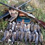 Способы и особенности охоты на голубя и горлицу