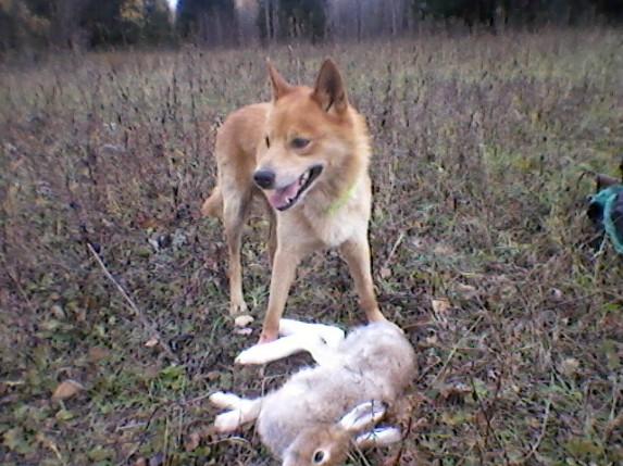 лайка и заяц