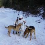 Особенности охоты на русака и беляка с разными собаками