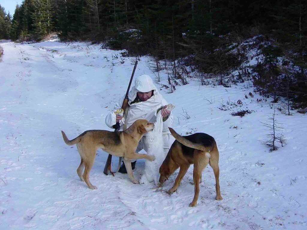 охота зимой в московской области