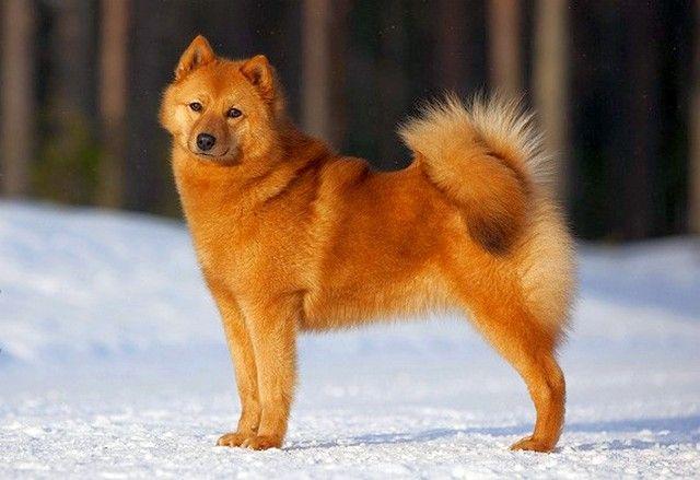 карело-финская зимой