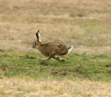 Охота на зайцев и фазанов