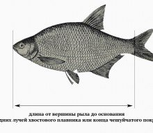 Актуальные правила рыболовства в Московской области и как быть в курсе всех изменений