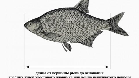 Актуальные на 2021 год правила рыболовства в Москве и Московской области и как быть в курсе всех изменений
